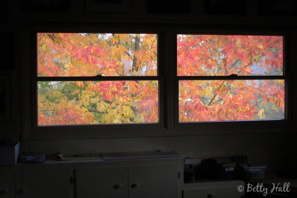 window view of colorful ash tree leaves
