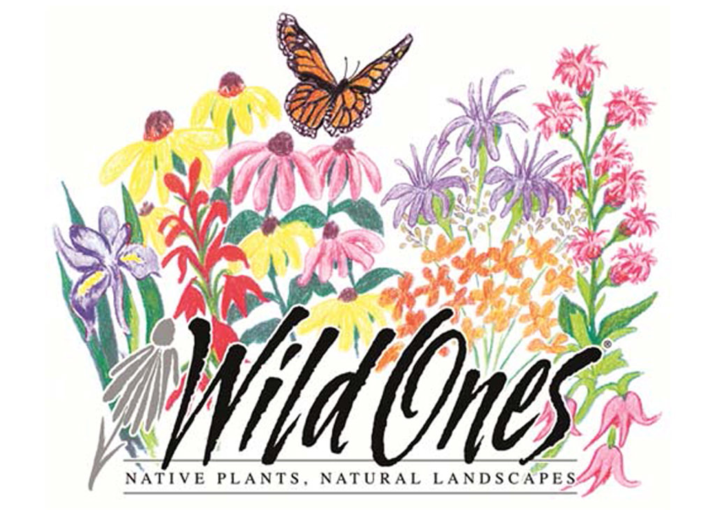 Wild Ones colorful graphic