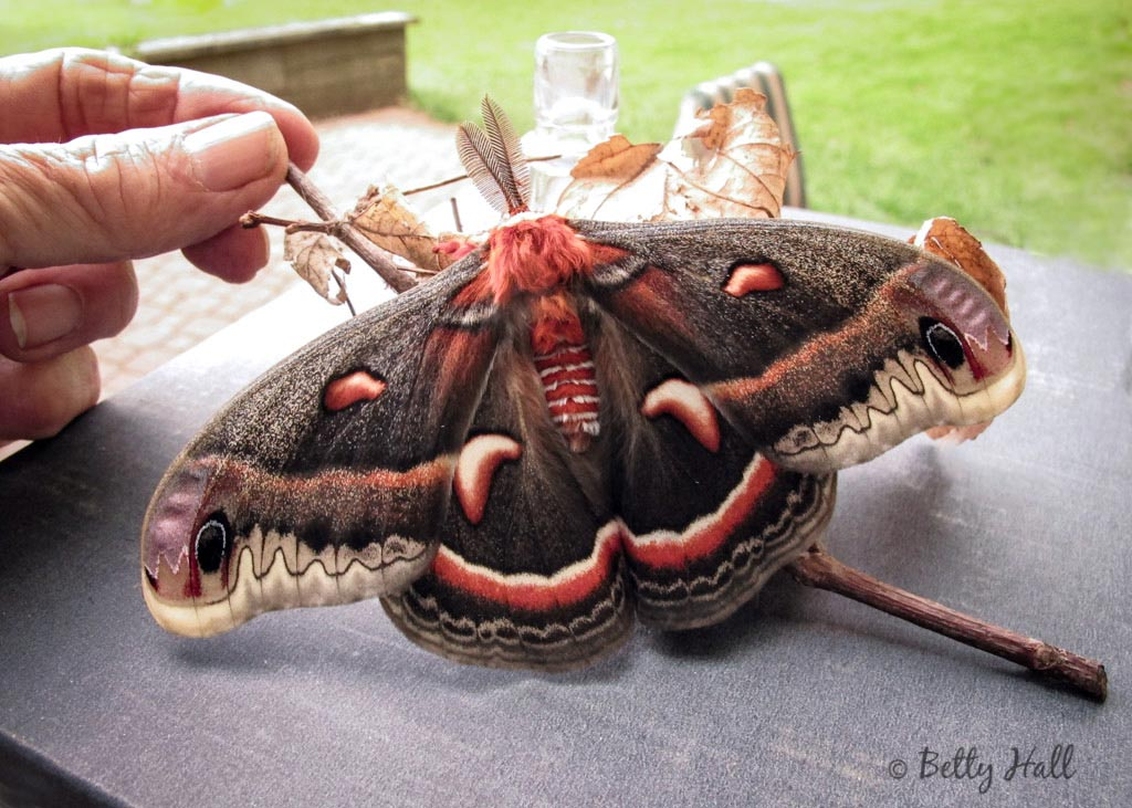 the story of the moth Since the human race first came into existence, storytelling has always been an art that can be appreciated by anyone any good story can often disconnect you with reality, and take you to far-off places whether they be folk tales or real-life adventures of course, the story itself is only half the equation – the other half is the.