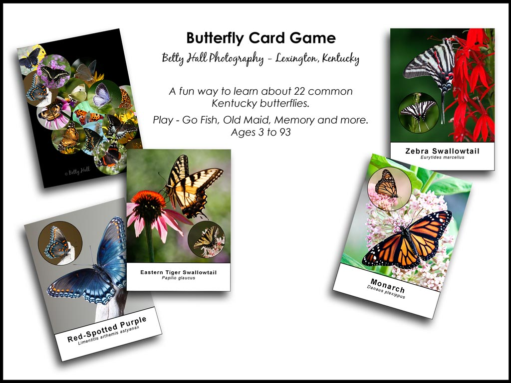 Butterfly card game graphic
