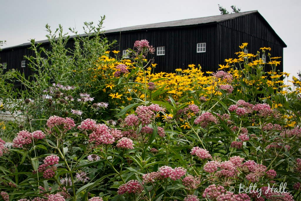 Monarch Waystation at Shaker Village KY