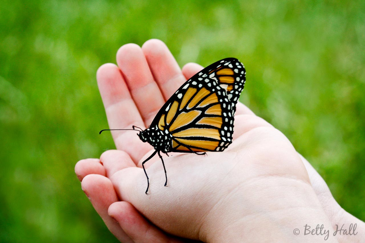 Child Holding Monarch Butterfly
