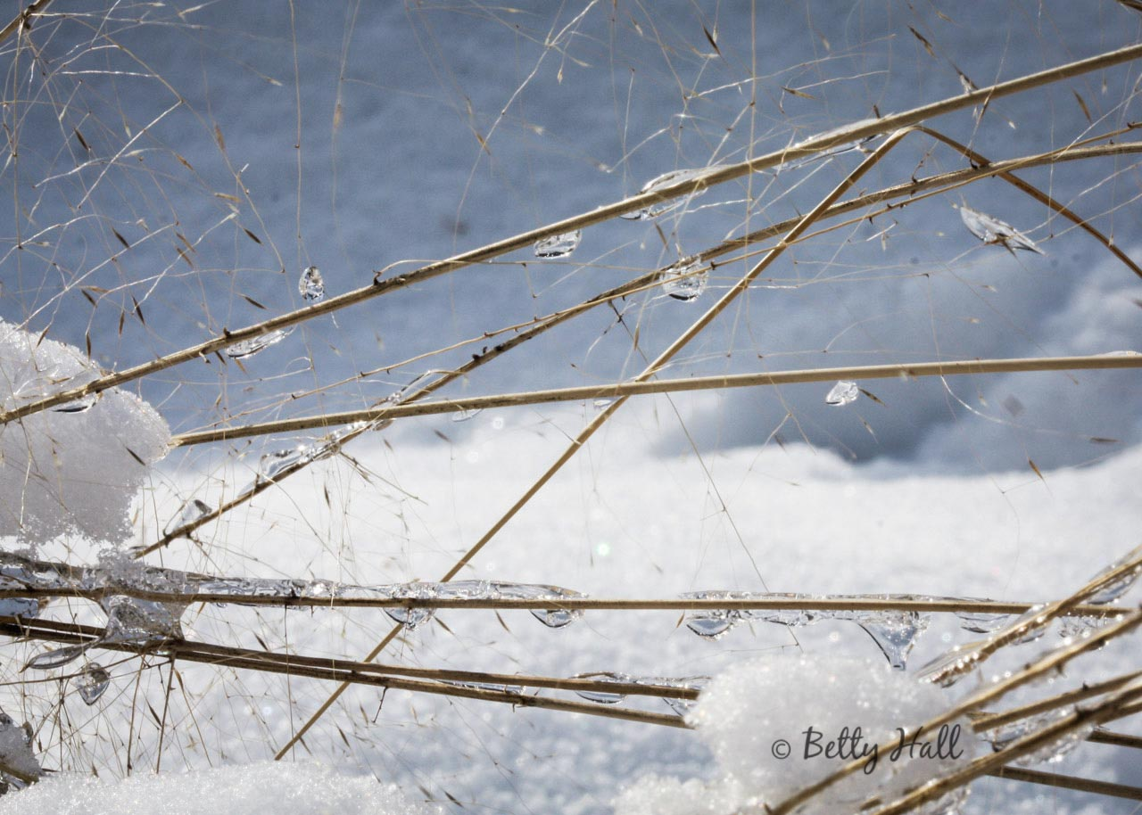 Muhly Grass with drops of ice