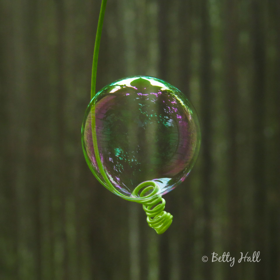 Bubble on passion flower tendril