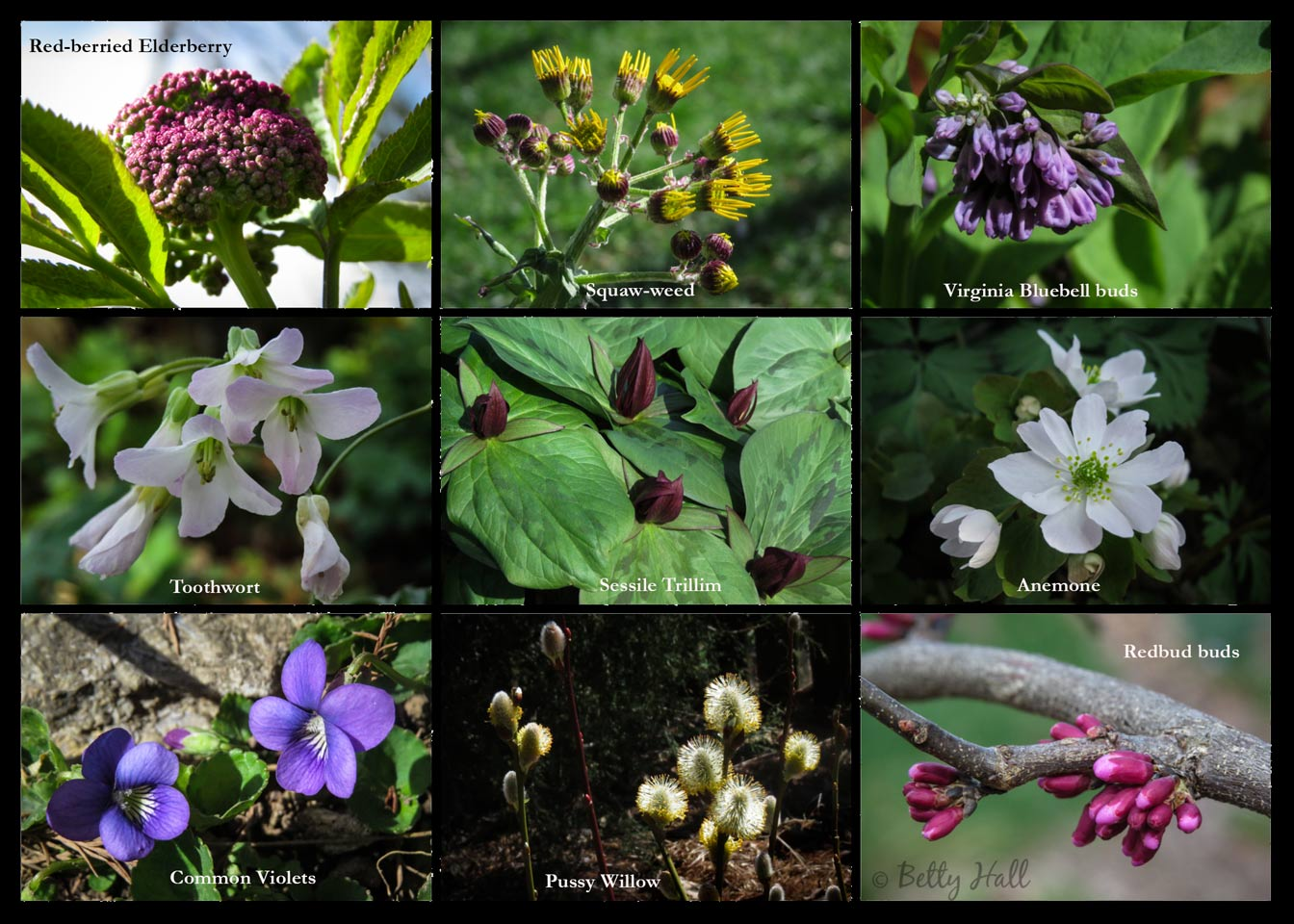 Collage of early spring flowers in our backyard