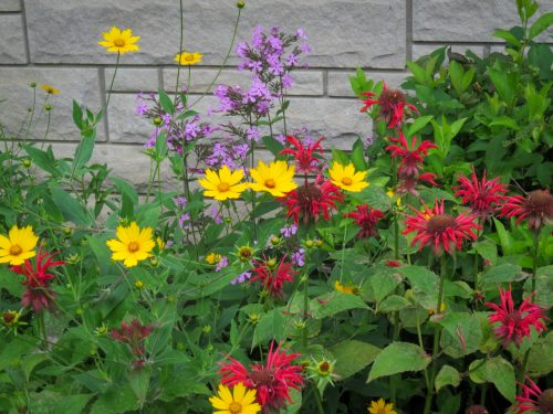 Red, purple and yellow summer flowers in front of the house